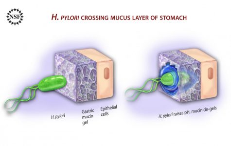 Know the dangers of H. pylori