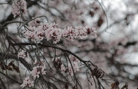Spring nature gallery